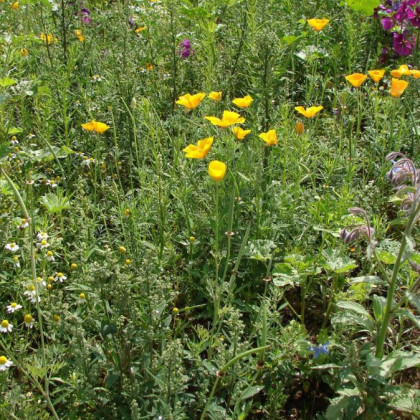 Darčekový balíček semien liečivých rastlín - zadarmo darčekové balenie